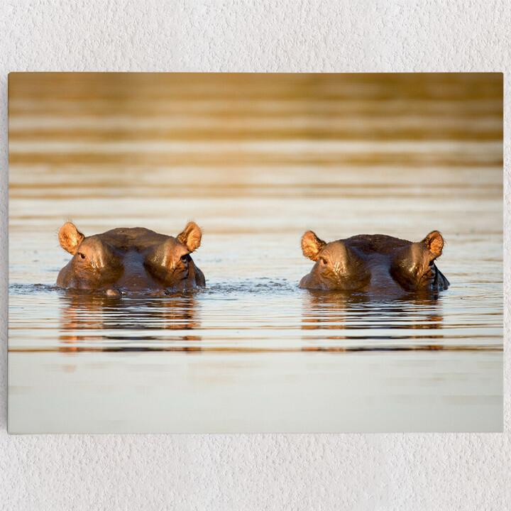 Personalisiertes Leinwandbild Nilpferd Krüger Nationalpark