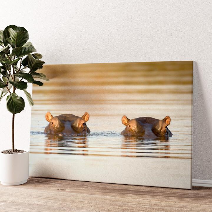 Nilpferd Krüger Nationalpark Wandbild personalisiert