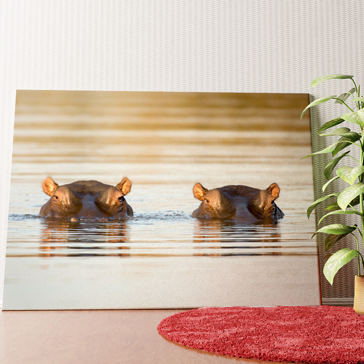 Personalisiertes Wandbild Nilpferd Krüger Nationalpark