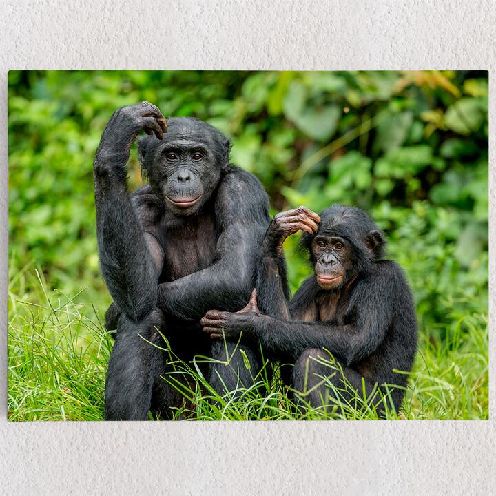 Personalisiertes Leinwandbild Bonobo im Kongo