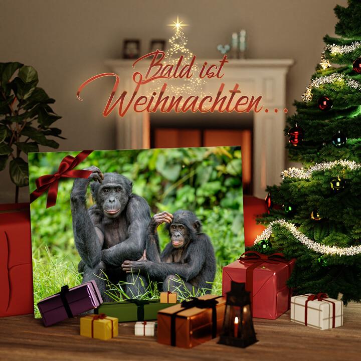 Liebesleinwand zu Weichnachten Bonobo im Kongo