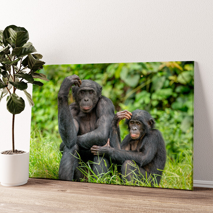 Bonobo im Kongo Wandbild personalisiert
