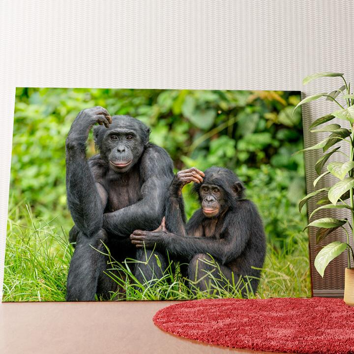 Personalisiertes Wandbild Bonobo im Kongo