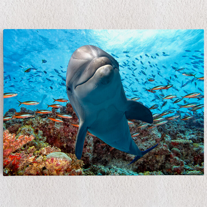 Personalisiertes Leinwandbild Delfin im Korallenriff