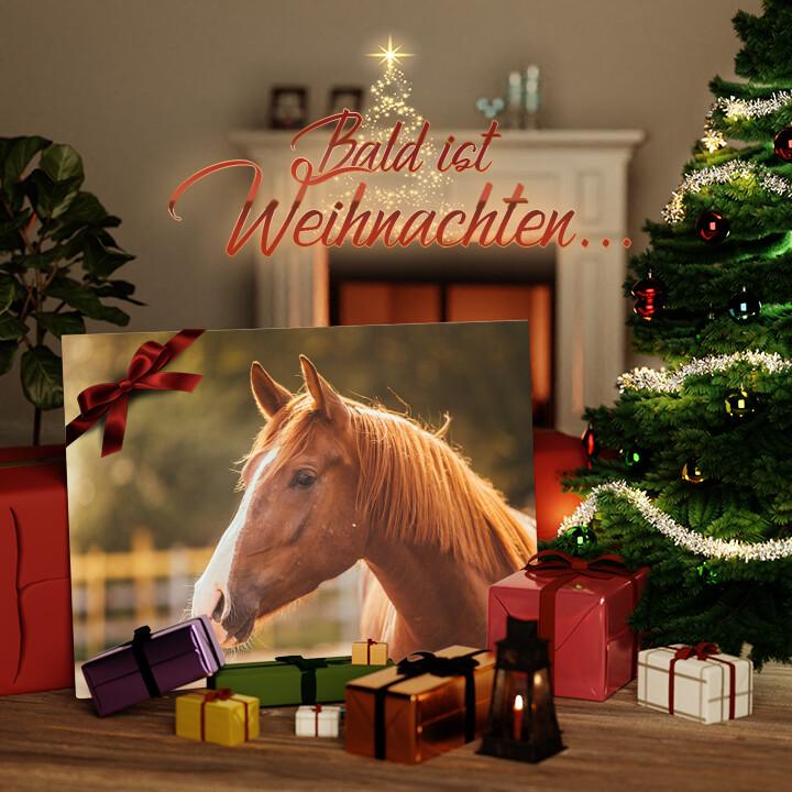 Liebesleinwand zu Weichnachten Pferd Porträt