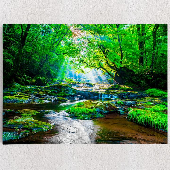 Personalisiertes Leinwandbild Kikuchi Valley Regenwald Japan