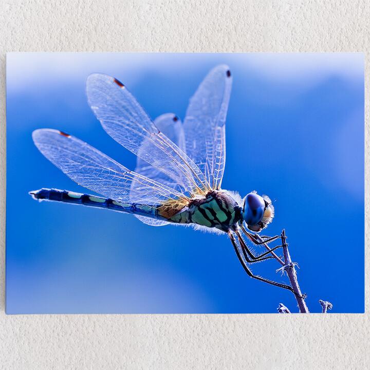 Personalisiertes Leinwandbild Libelle