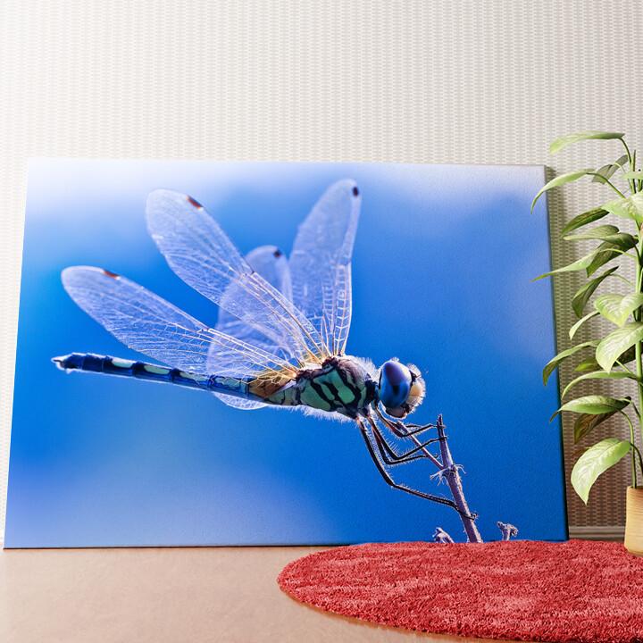 Personalisiertes Wandbild Libelle