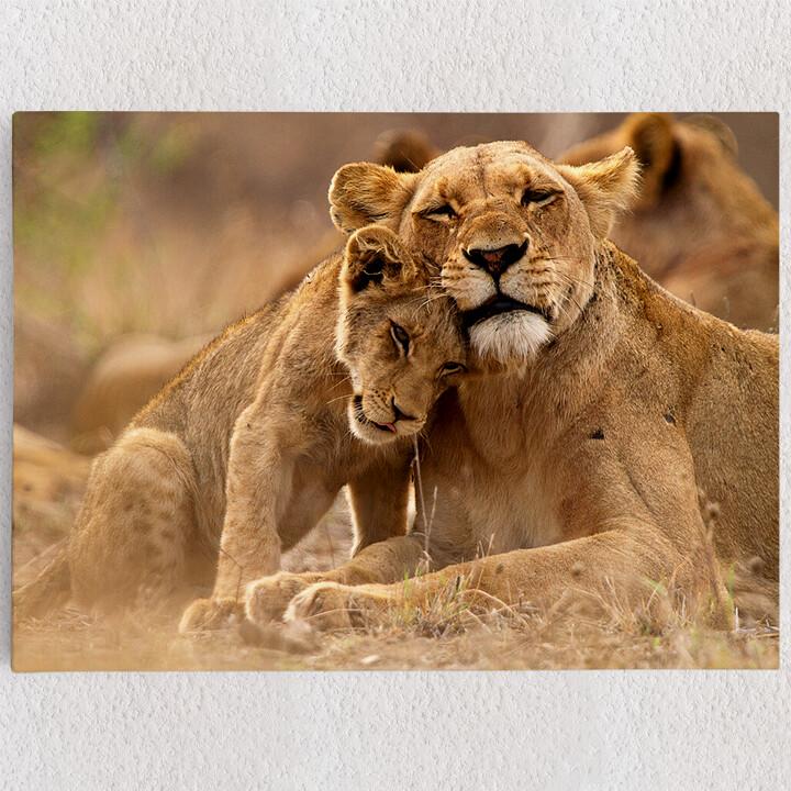 Personalisiertes Leinwandbild Löwe Mutter Kind Krüger Nationalpark