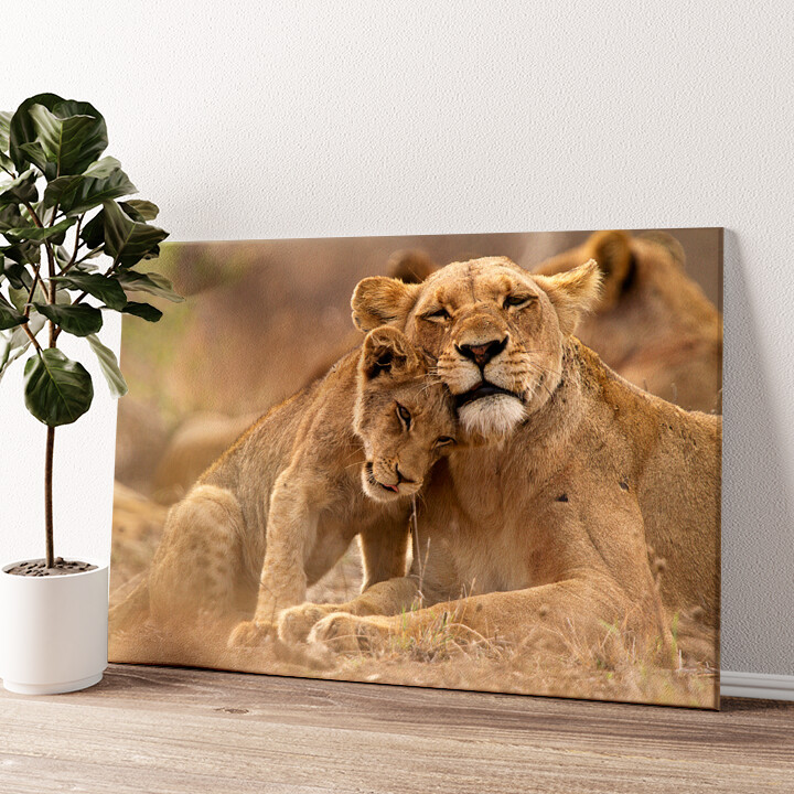 Löwe Mutter Kind Krüger Nationalpark Wandbild personalisiert