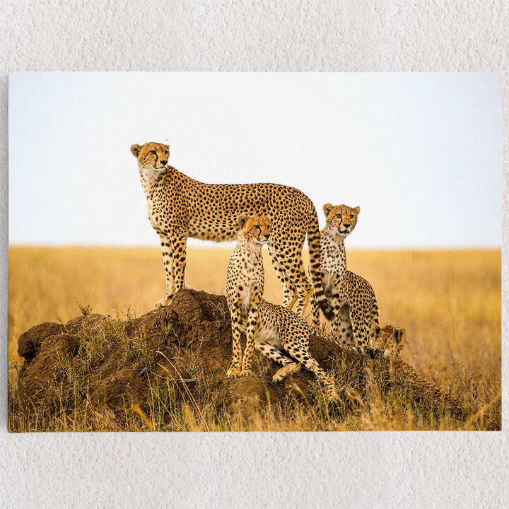 Personalisiertes Leinwandbild Geparden Serengeti