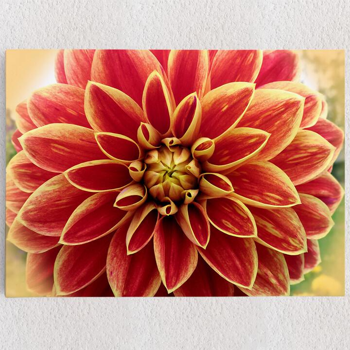 Personalisiertes Leinwandbild Rote Chrysantheme