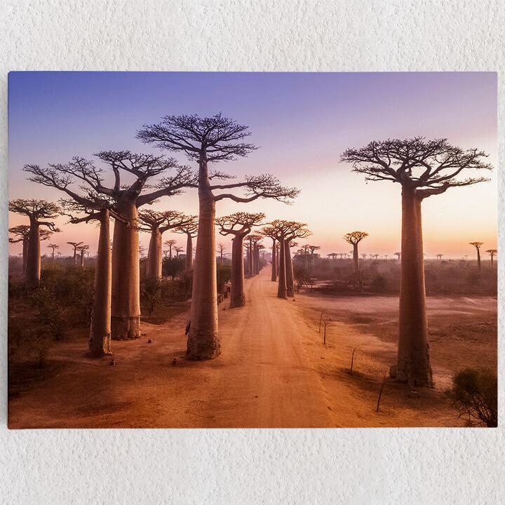 Personalisiertes Leinwandbild Baobab Bäume Madagaskar