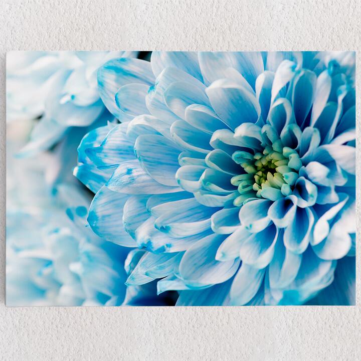 Personalisiertes Leinwandbild Blaue Chrysantheme