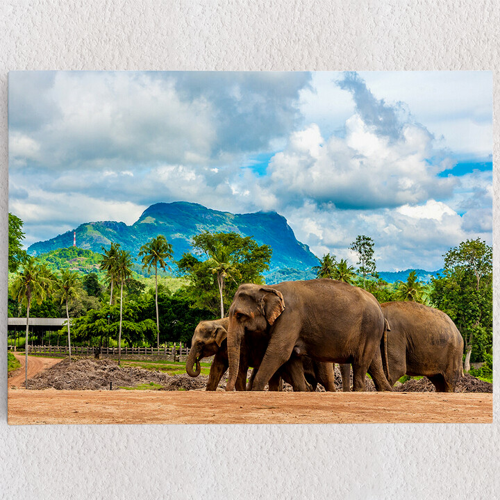 Personalisiertes Leinwandbild Elefanten in Sri Lanka