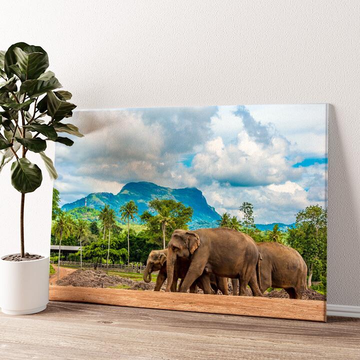 Elefanten in Sri Lanka Wandbild personalisiert