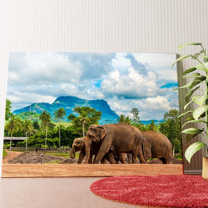 Personalisiertes Wandbild Elefanten in Sri Lanka
